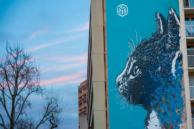 Chat de C215 - Paris 13